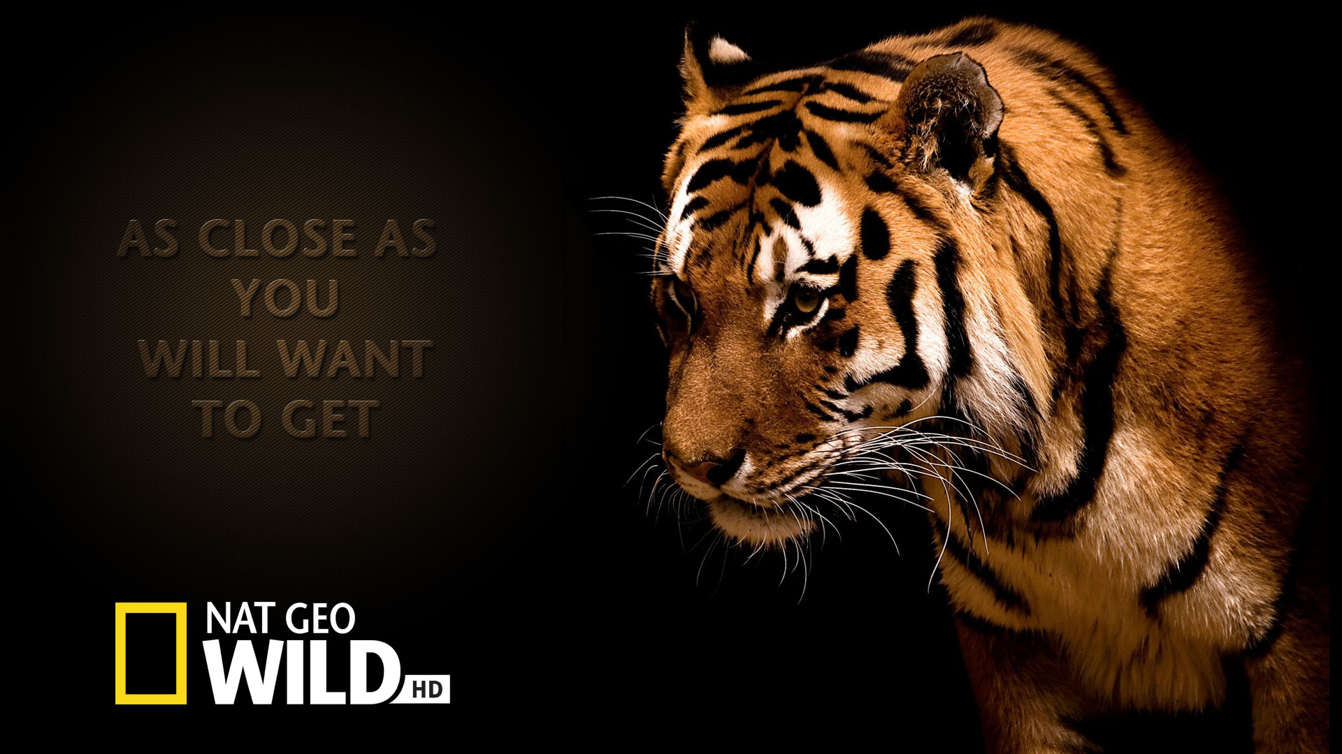 Nat Geo Ad Tiger